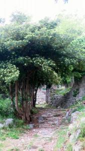 Festung3