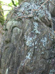 Baumskulptur2