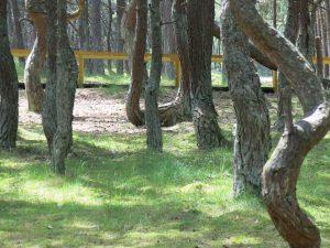 tanzender Wald